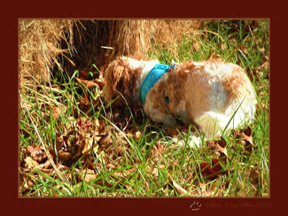 Fast and Furriest Blogger Molly sniffing for moles in her hay-field